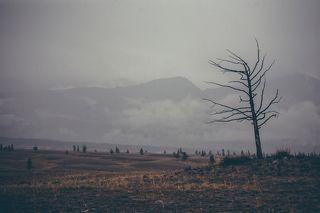 По дороге на озера встретили многолетнюю лиственницу. По словам проводника она стоит с незапамятных времен, когда он был еще маленьким...
