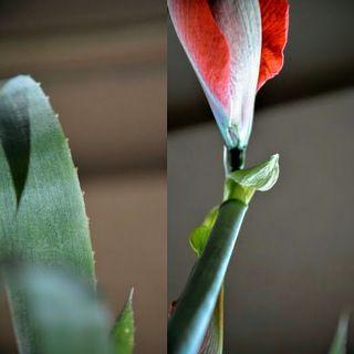 За это Боги превратили ее в прекрасный ядовитый цветок, чтобы никто не смел подойти и прикоснуться к ней.