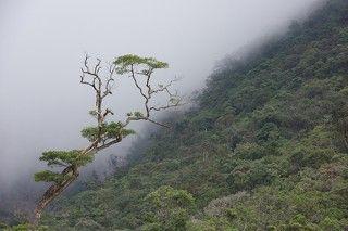 Вьетнам. В горах