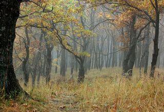 Молодая дубрава ранним утром близ Святого источника в селе Пощупово Рыбновского района Рязанской области.