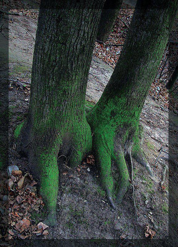 Лес, природа photo preview