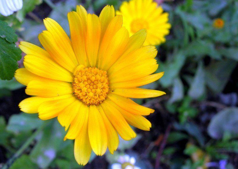 цветок, цветы, макромир ICQ ( Away )photo preview