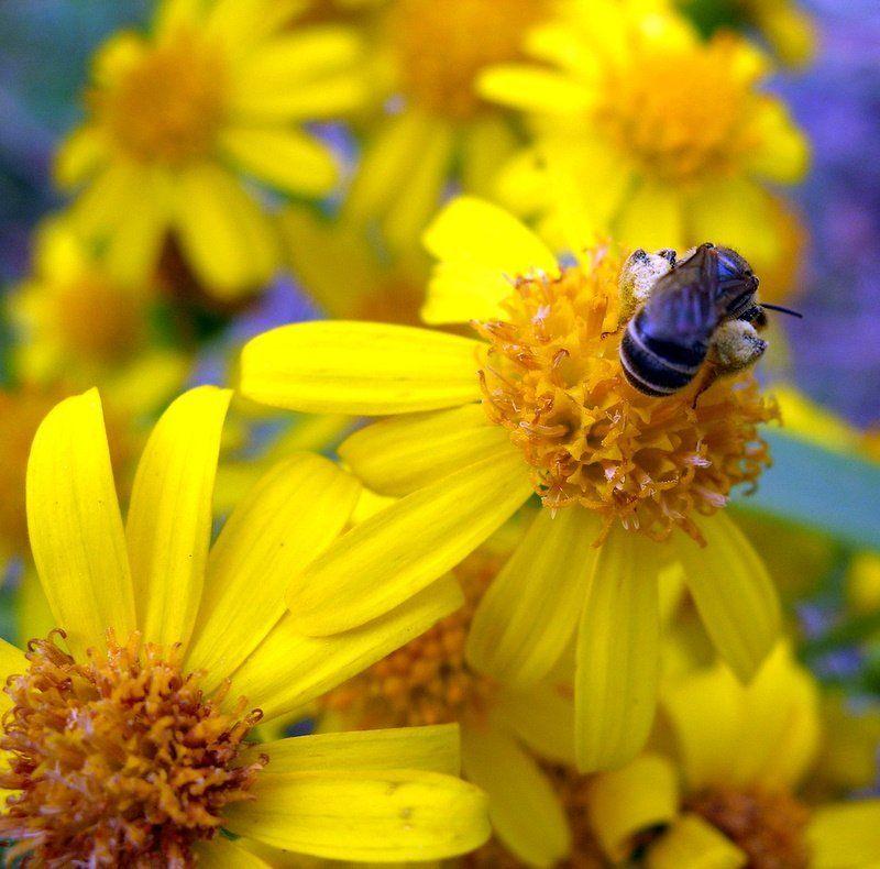 цветок, цветы, макромир, пчела Пчелиная работаphoto preview