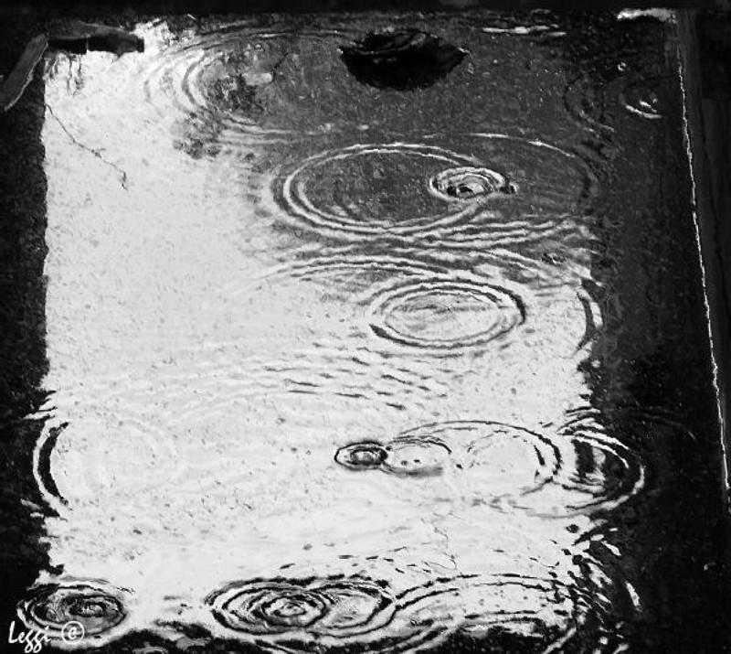 дождь, лужа, круги Дождьphoto preview