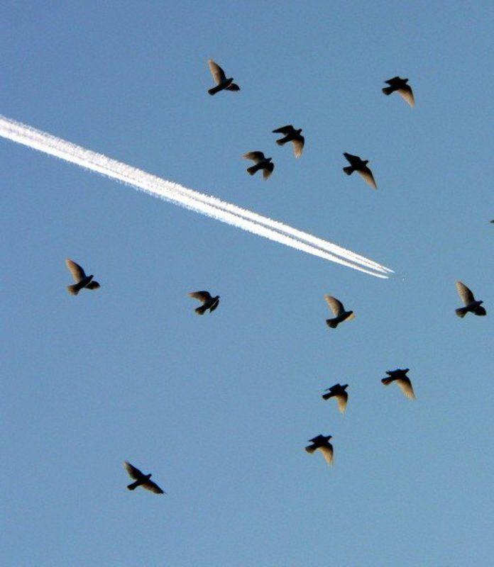 небо полётыphoto preview