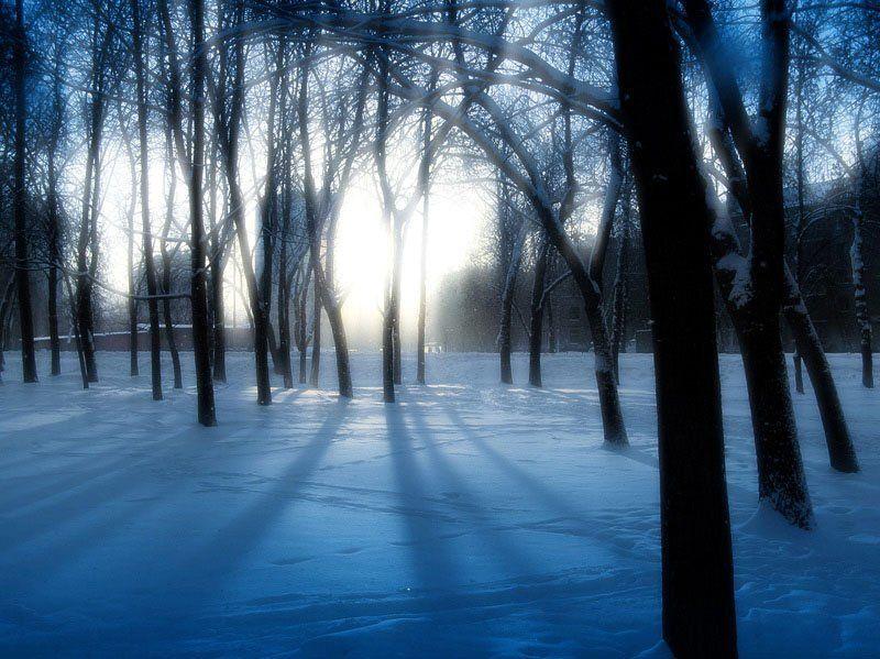 зима, лес, молчание, тишина, никого, линкольн, мальчики и девочки *photo preview