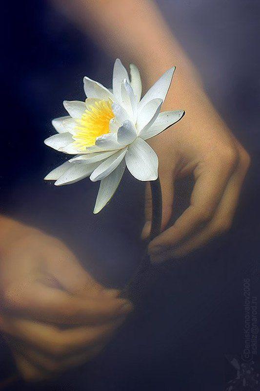 лилия, руки, вода ... лилия в двух стихиях...photo preview