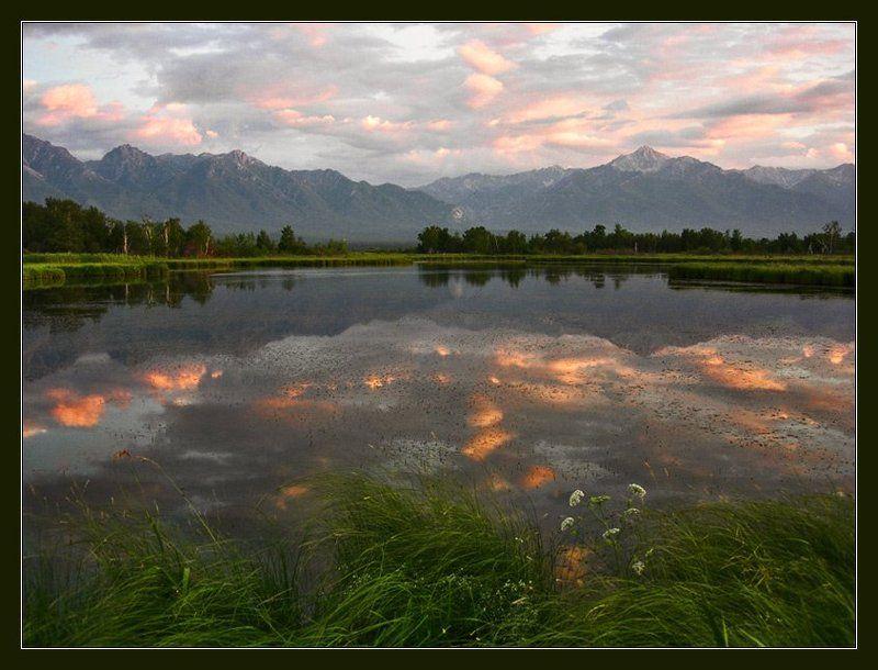 Баргузинская долина. Курумкан. Болотистый берег Баргузина. Старое цветущее озеро. Бурятия озёрнаяphoto preview