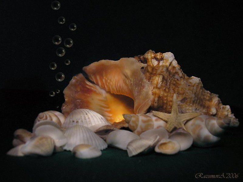 Ракушки, натюрморт, световая кисть Морскойphoto preview