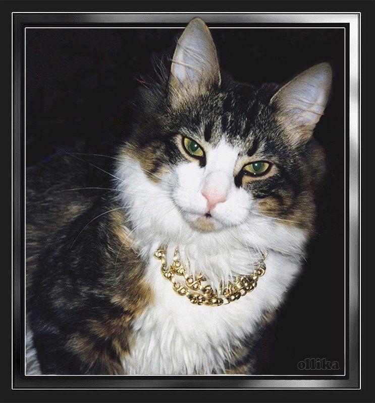 Кот, Филипп Осознание собственного Превосходстваphoto preview