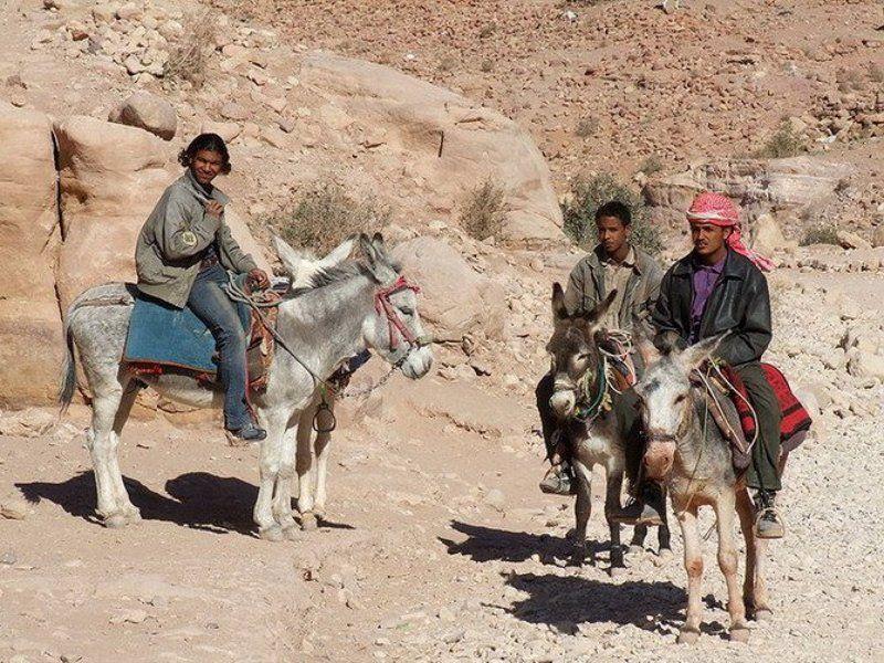 Иордания, бедуины Погонщики муловphoto preview