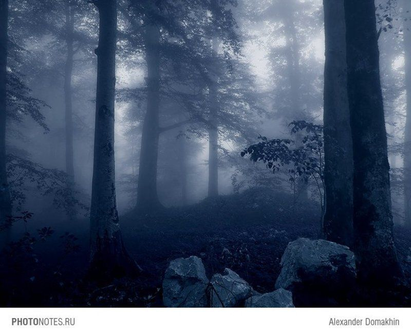 лес, Кубань, туман, утро, пейзаж, путешествия, PHOTONOTES.RU Таинственный лесphoto preview