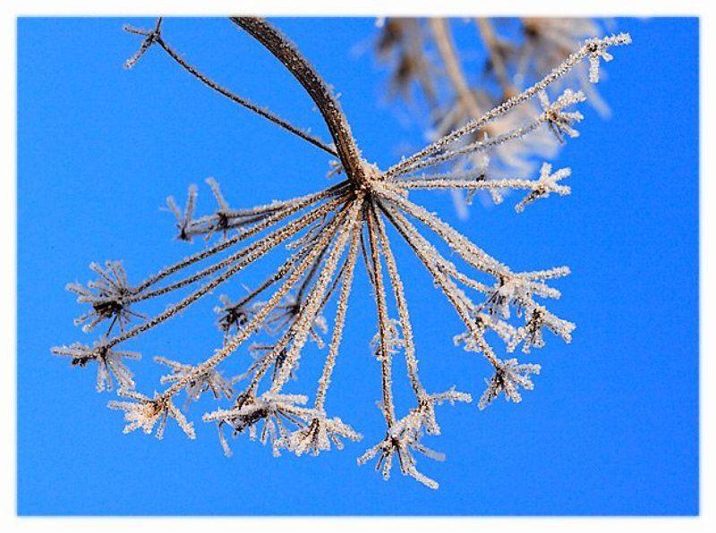 Макро снег борщевик б/нphoto preview