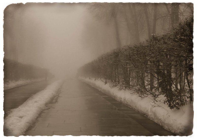 туман ---photo preview