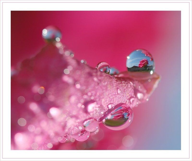 капля, роза, лепесток На розовой волнеphoto preview