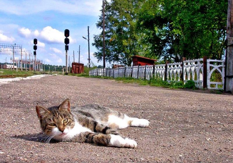 Бологое-2, перрон, кот,Хозяин станции, Владимир Хозяин станцииphoto preview