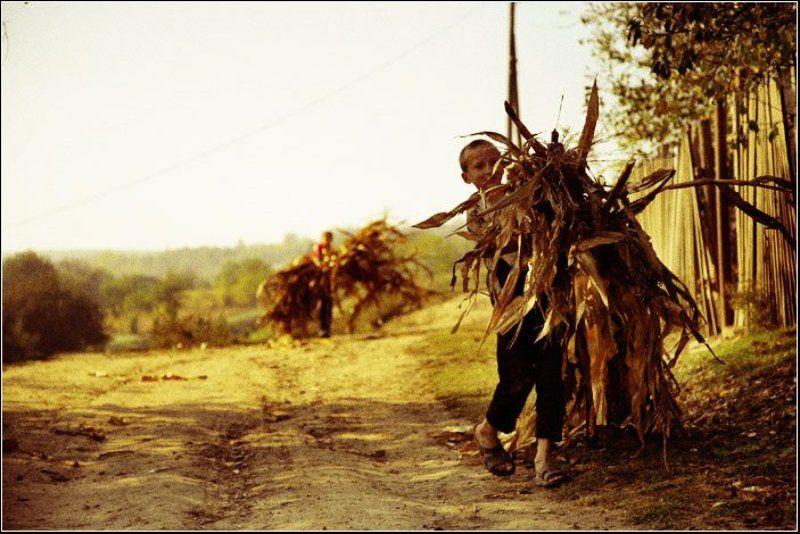 Осенью в деревне.photo preview