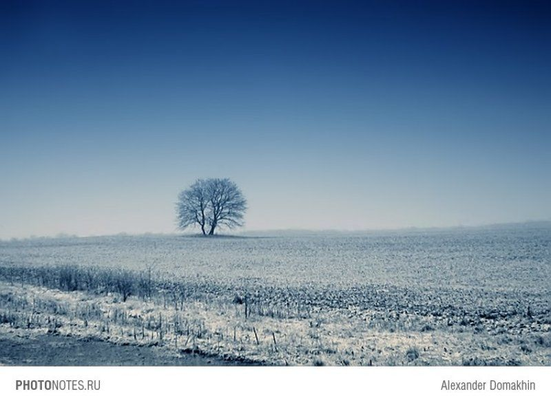 Кубань, пейзаж, зима, дерево, PHOTONOTES.RU Сто лет одиночестваphoto preview