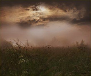 Про свидание двух птичек в тумане)