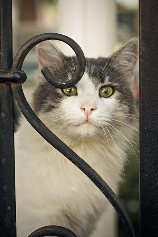 кот, кошка photo preview