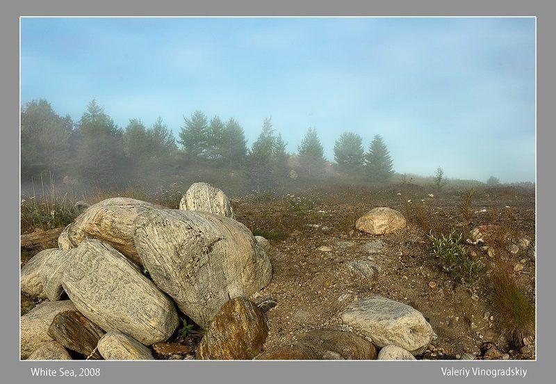 туман камни природа деревья Тишинаphoto preview