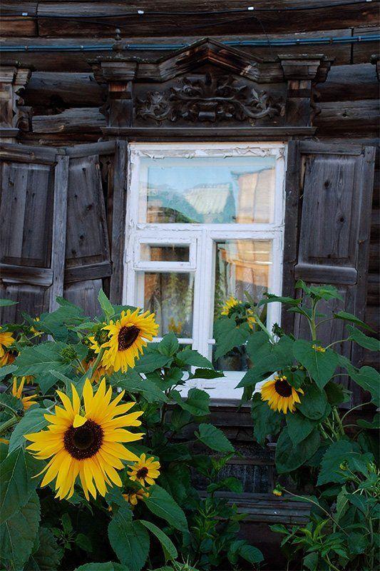 томск, архитектура, дерево, цветы Про старый дом и подсолнухиphoto preview