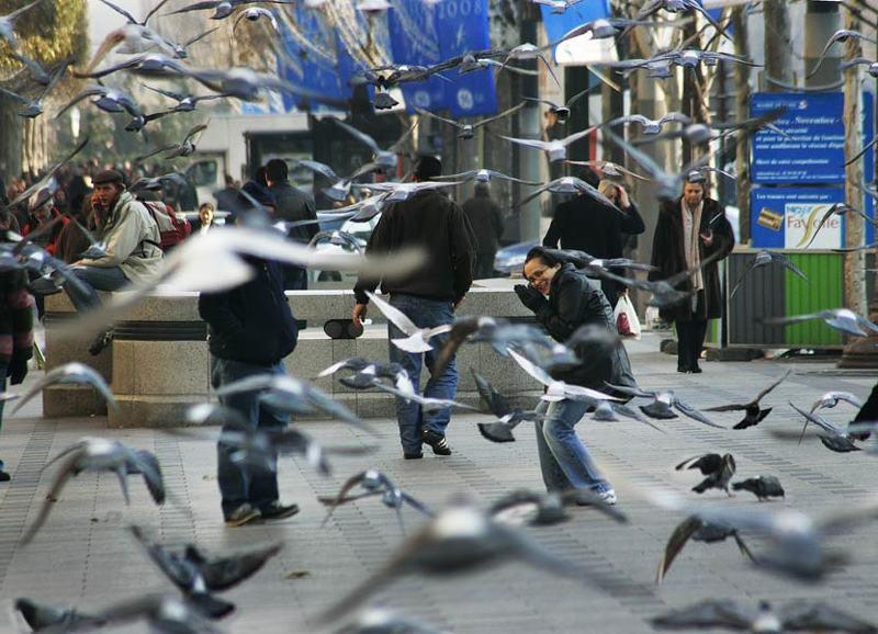 голуби, париж photo preview