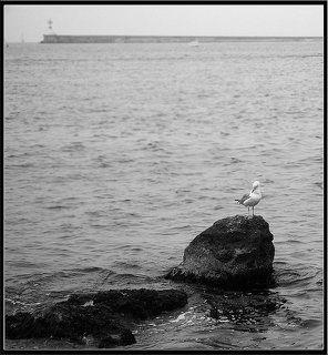 Чайка и маяк