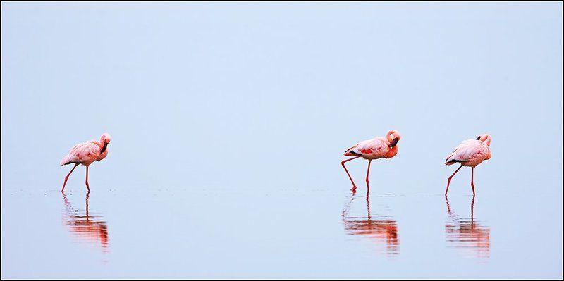 немного о фламингоphoto preview