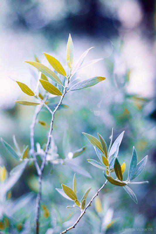 бокэ, растение, ветка, лето, цвет photo preview