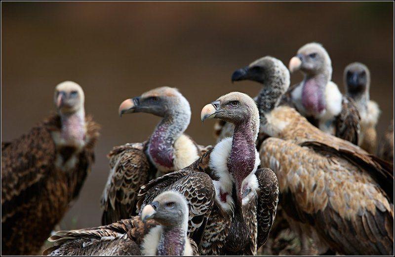 Адские птицыphoto preview