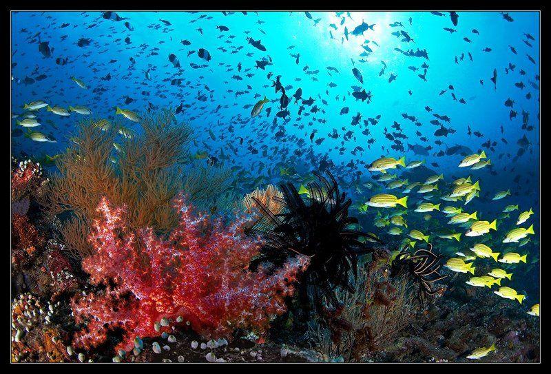 Краски моряphoto preview