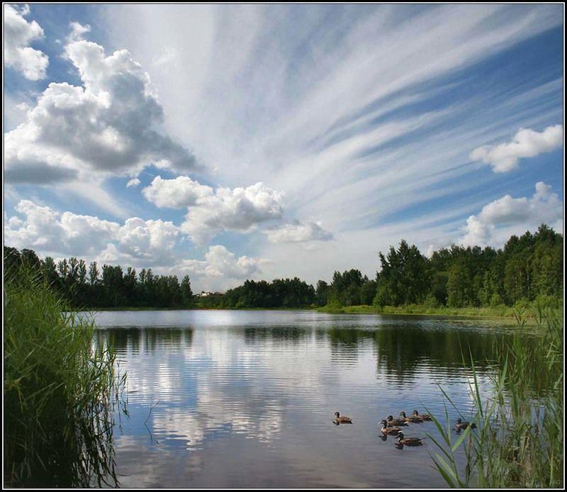 финское озеро, шуваловский парк, облака, озеро, лето, природа, пейзаж Летоphoto preview
