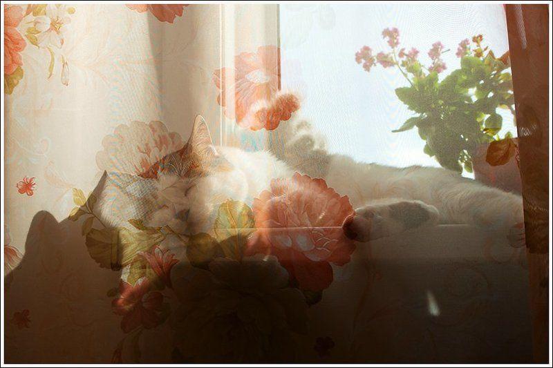 Розовые сны кота Монеронаphoto preview