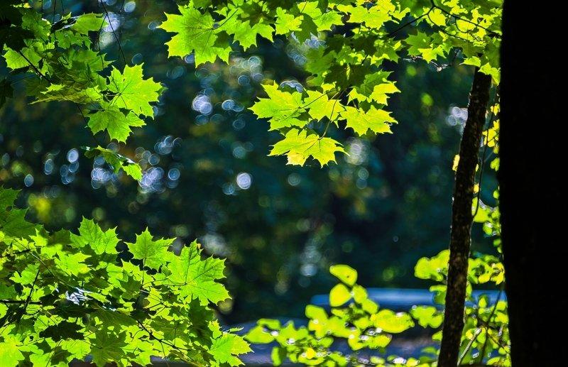 Autumn Nocturnephoto preview