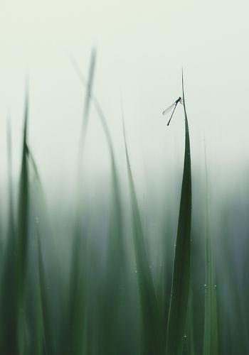 Среди уснувших трав...