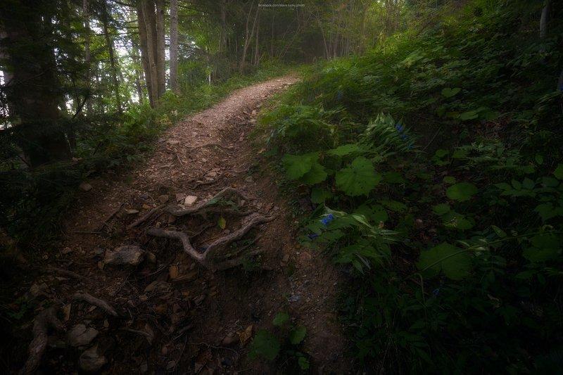 тропа, лес, природа, карпаты, подъём, поход По дорожке, по дорожке. По тропинке, по тропинкеphoto preview