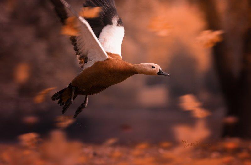 природа, лес, поля, огороды, животные, птицы, макро ... второй пошел ;) фото превью