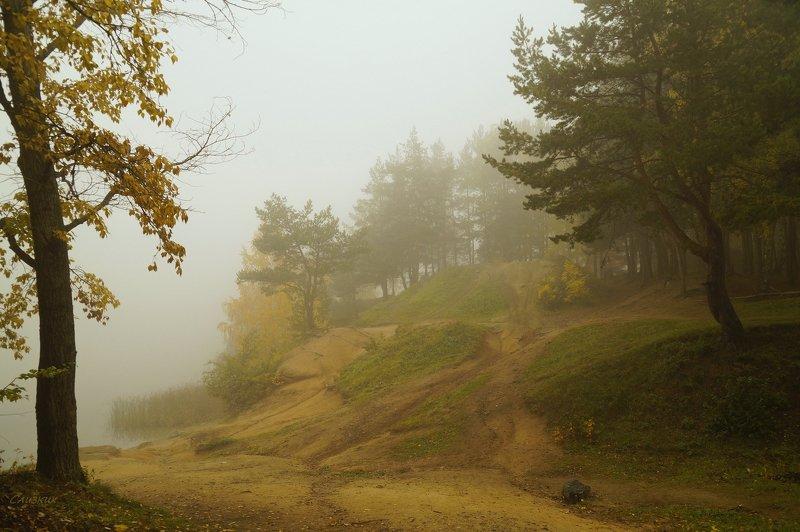 пейзаж,туман,октябрь,лес Туманище..photo preview
