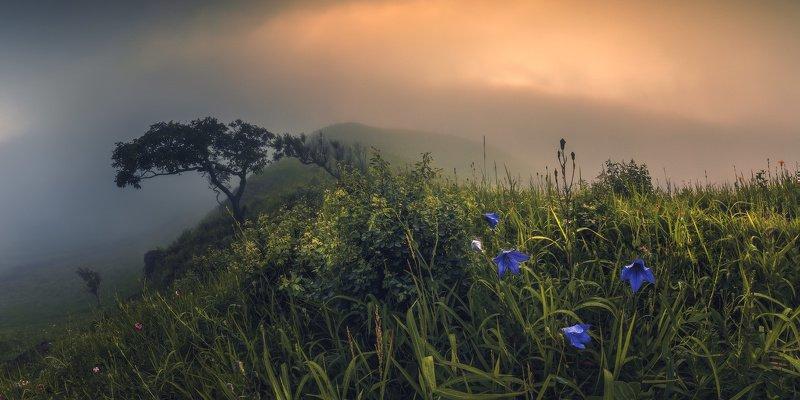 панорама, лето, туман ***photo preview