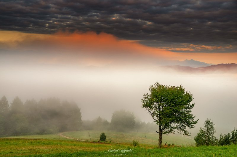 #poland #morning #sunrise #fog #landscape #pentax #benro #benq #tree #mountains Tree...photo preview