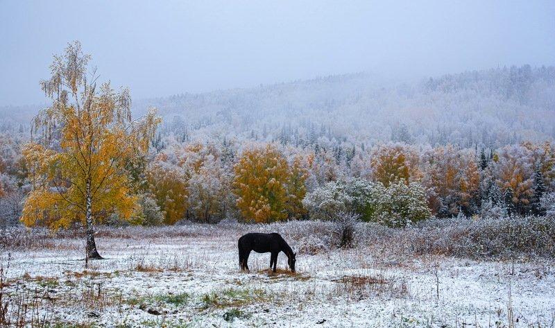 алтай. осень. горы. Первый снег фото превью