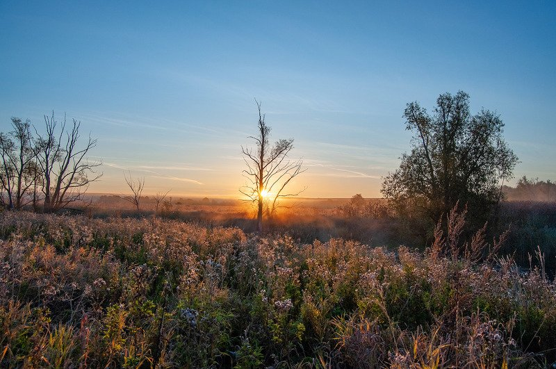 утро, рассвет, речка, поле, дерево, солнце, нижний новгород, саранск ***photo preview