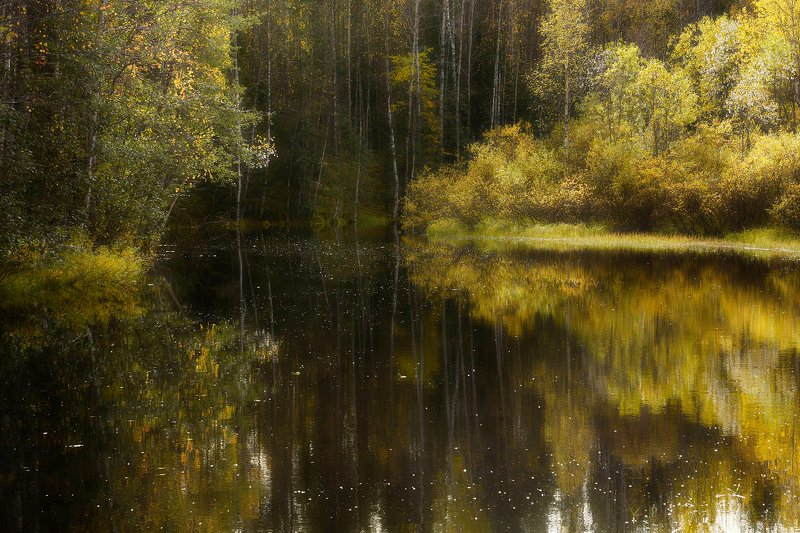 осень, сентябрь, река, берег, вода, отражения, тишина, кусты, деревья Тихая заводьphoto preview
