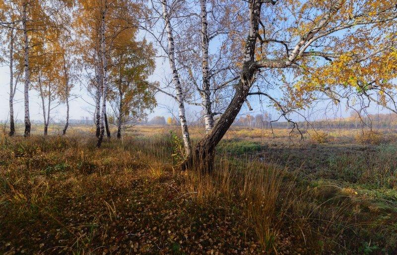 Октябрь, берёзы.photo preview