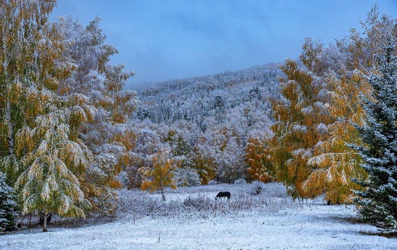 алтай. осень. горы. *** фото превью