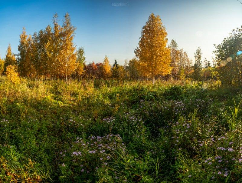 утро, киров, тепло, солнце, берег, вятка, пейзаж, трава, осень, золото, kirov, vyatka, цветы, береза, деревья, сентябрь Утроphoto preview