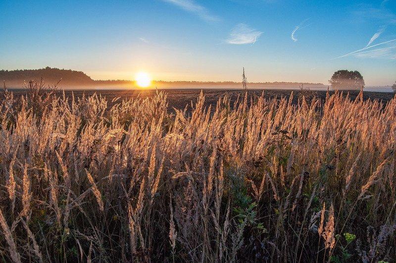 утро, рассвет, поле, туман, солнце ***photo preview