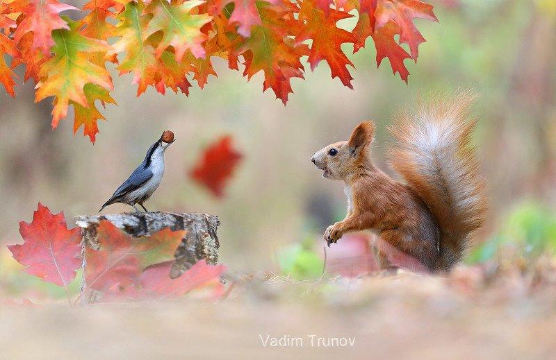 белка, squirrel, птица, осень Мой орешек!photo preview