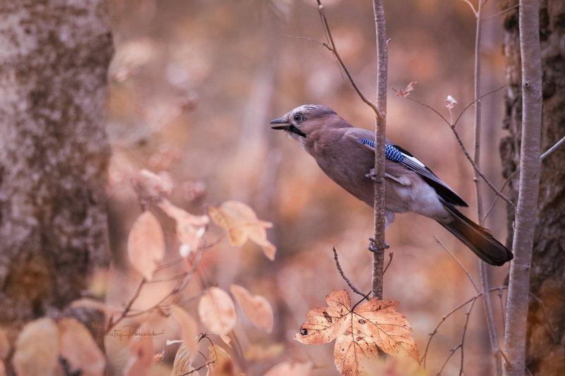 природа, лес, поля, огороды, животные, птицы, макро Слушая поступь осени фото превью